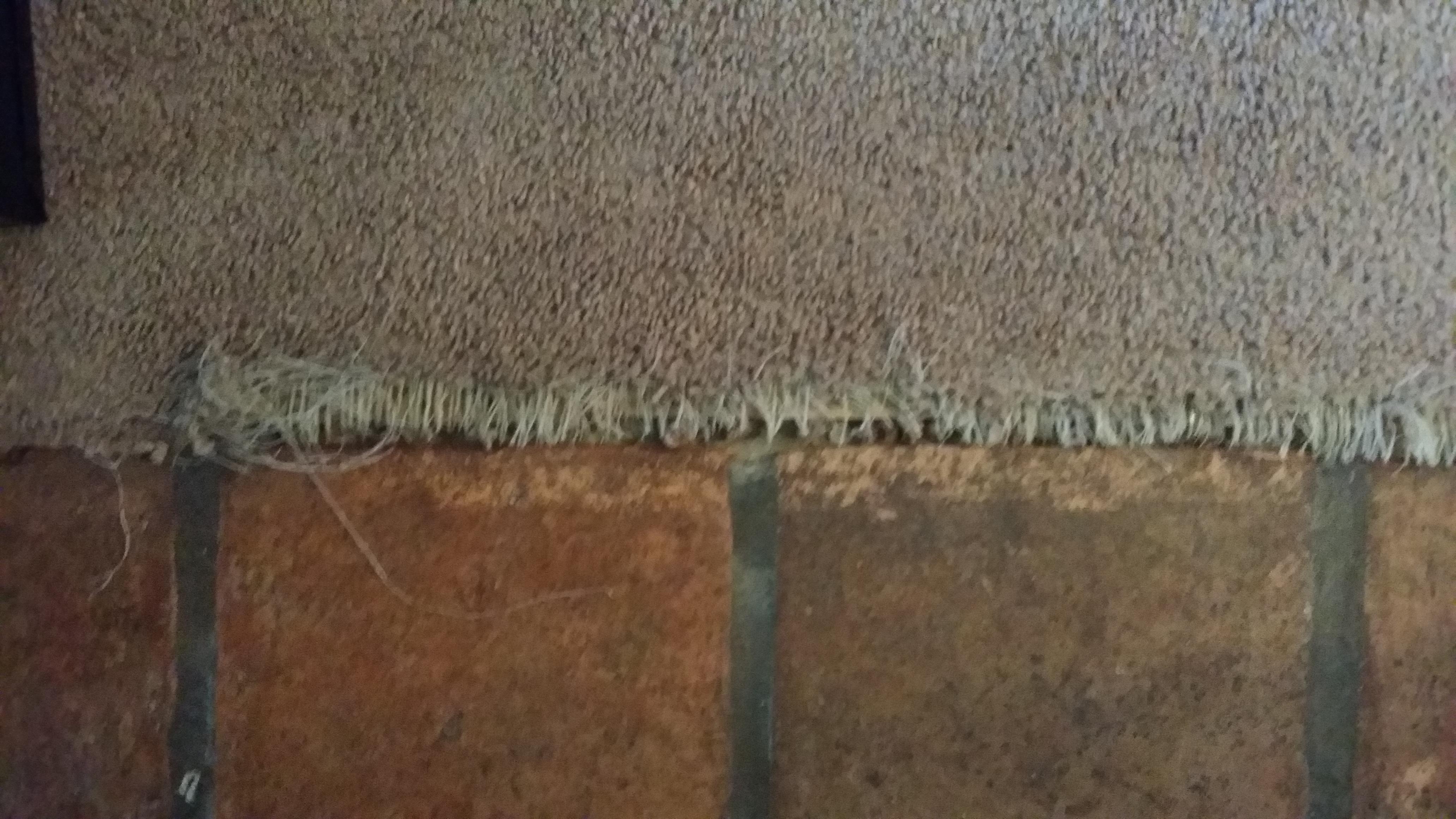 Saltillo To Carpet Turned Chew Toy Carpet Repair Tucson