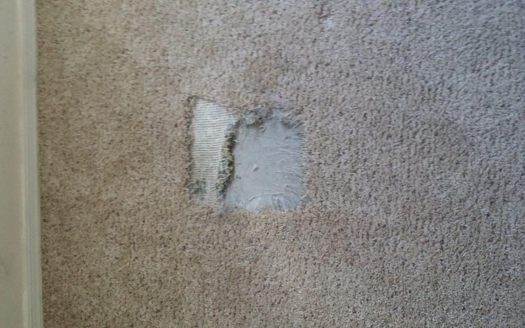 SW Tucson Carpet Repair