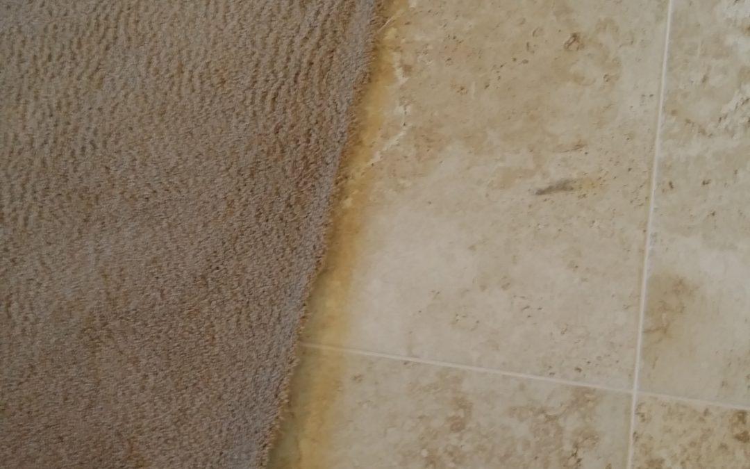 Eagle Crest Carpet Repair